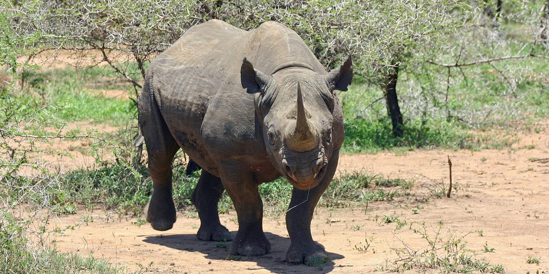 Wildlife spotting in Swaziland