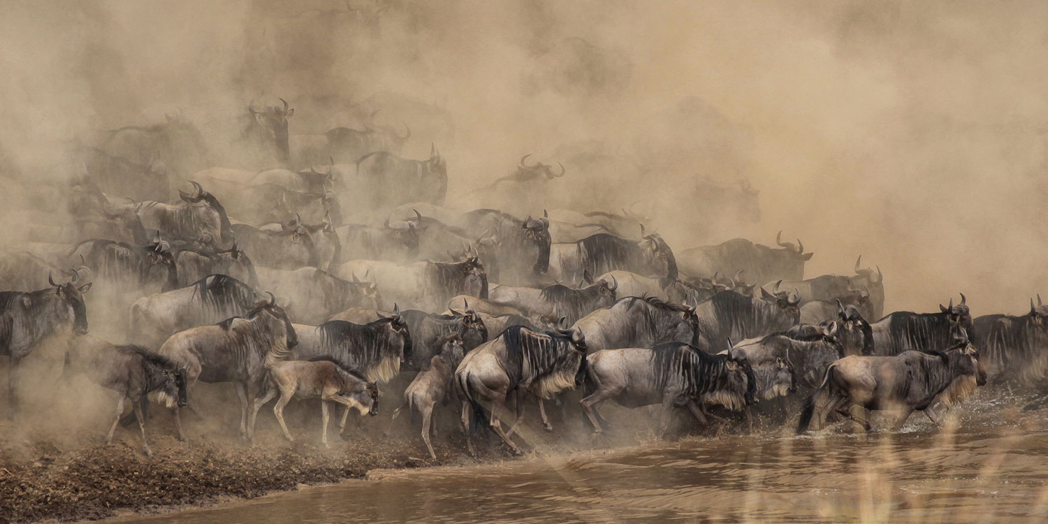 See the spectacular Great Migration in action