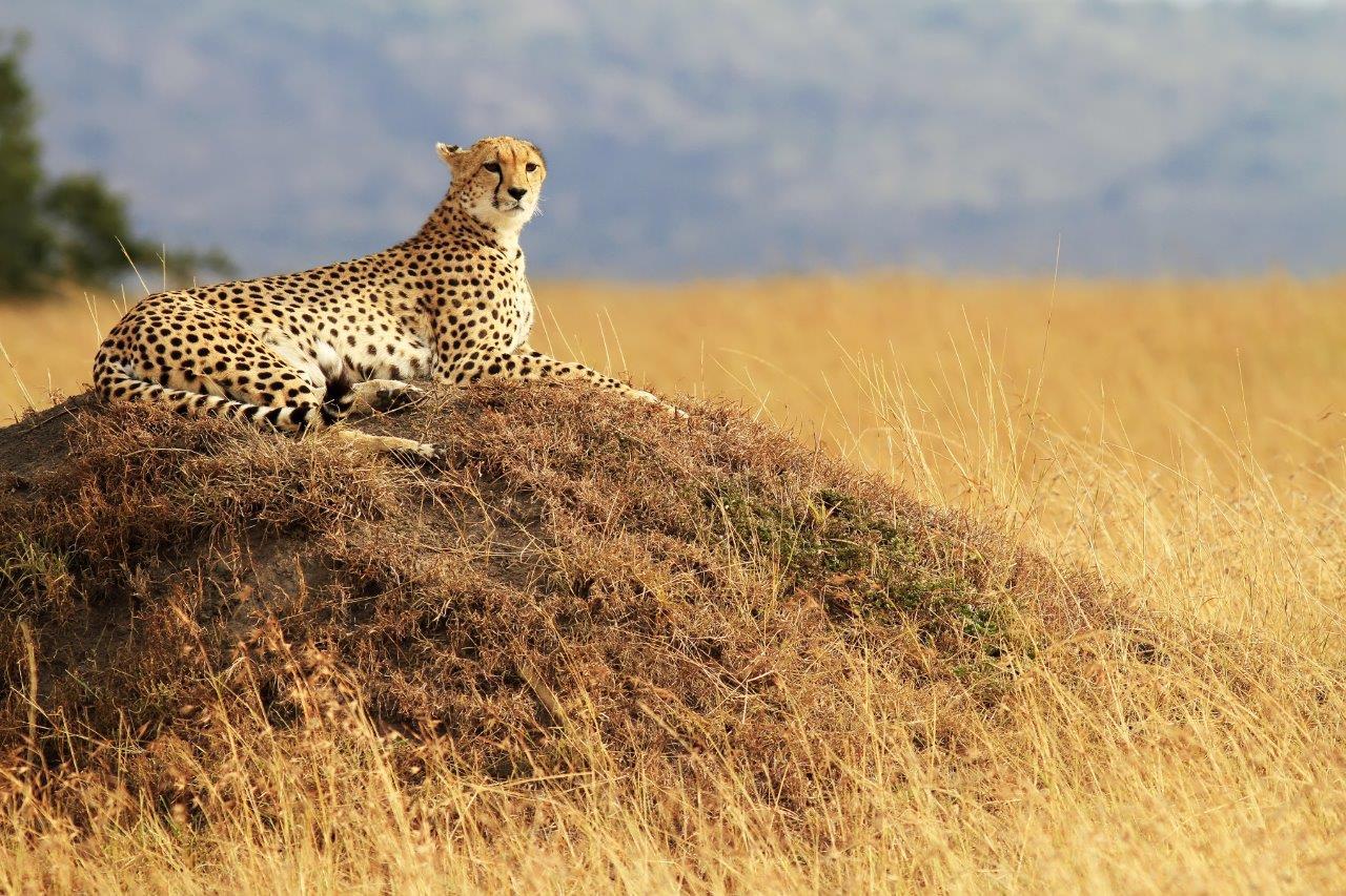 Simply Kenya, Sopa Lodges 6 Days