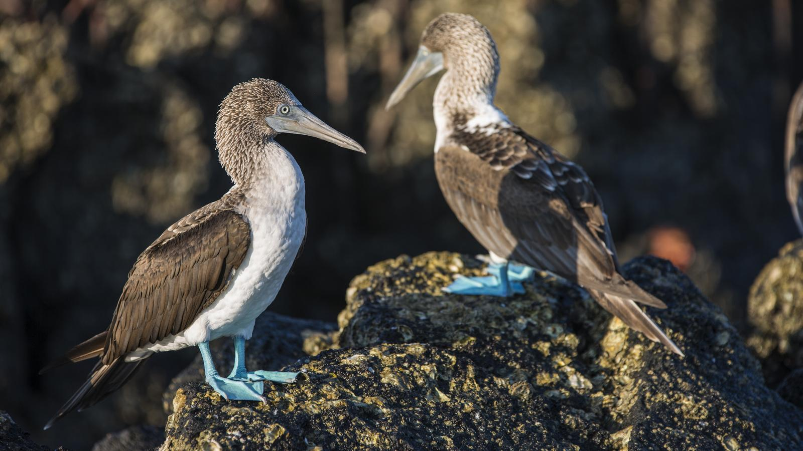 Galápagos — West, Central and East Islands aboard the Monserrat