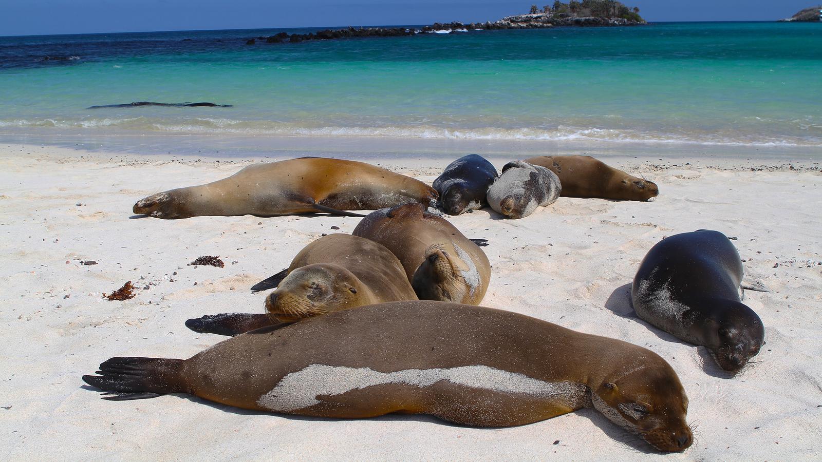 Galápagos — West & Central Islands aboard the Eden
