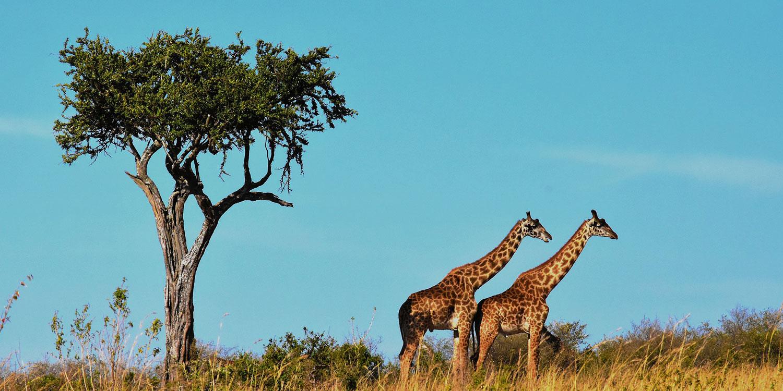 Ultimate Kenya & Tanzania - 11 Days