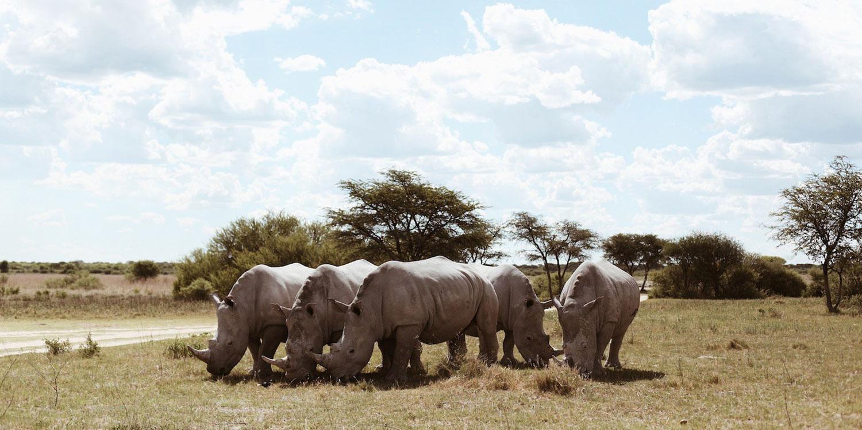 Okavango Delta and Victoria Falls Serviced Camping