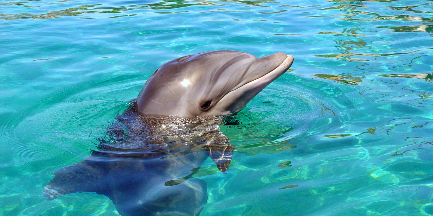 Dolphins, Beaches and Oases
