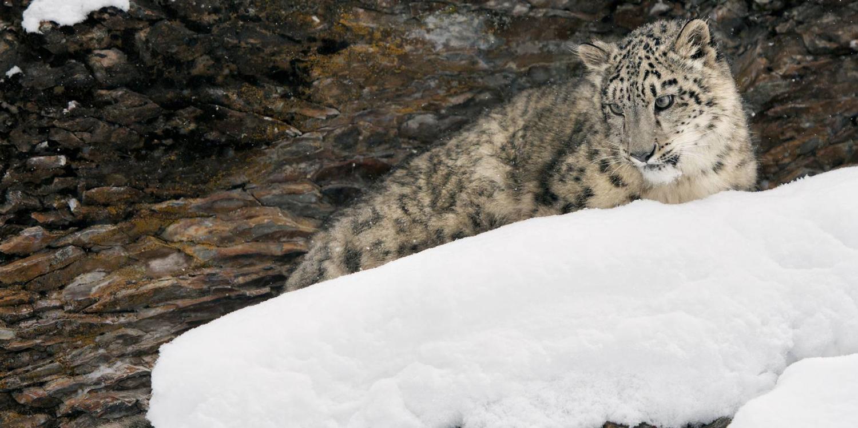 Unravel Ladakh's hidden animal kingdom