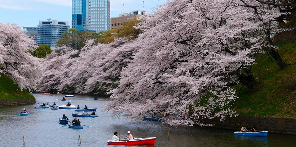Japan: Cherry Blossom Trail