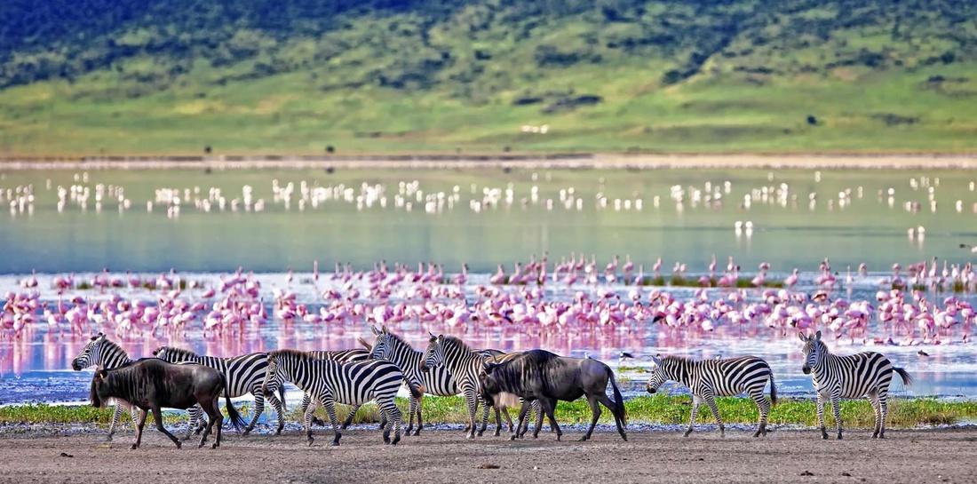 Wild Kenya