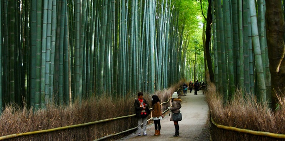 JAPAN: Cultural Odysseys