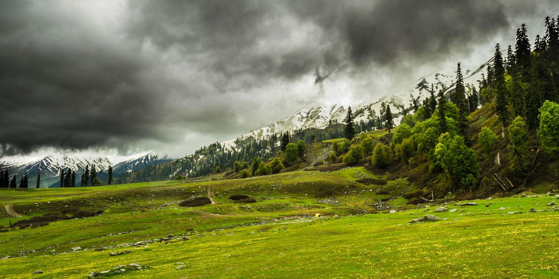 Kashmir's Tulip Festival