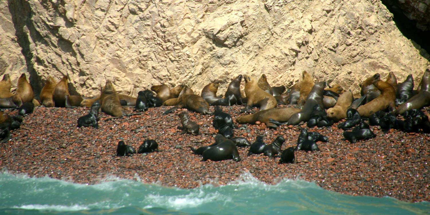 The Ballestas Islands: wildlife everywhere you look!