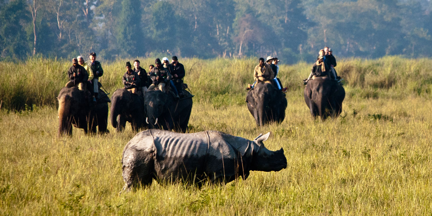 Explore Kaziranga: where the wild things are