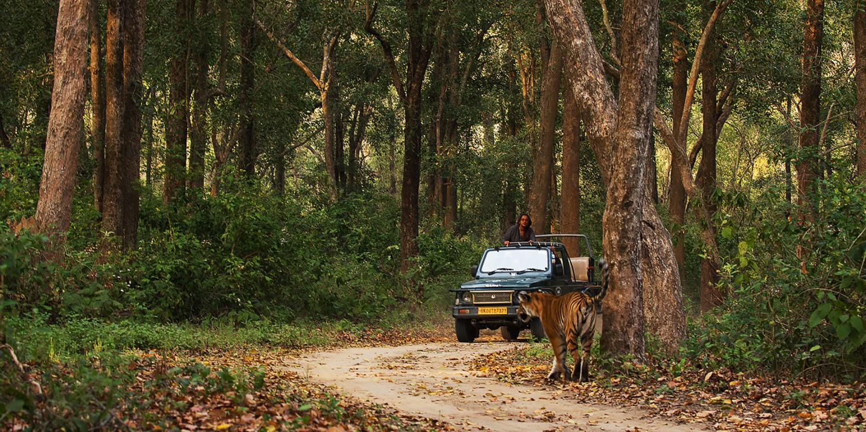 Wildlife Photography With An Award-Winning Expert