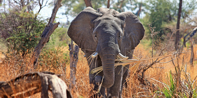 South Africa Lodge Safari