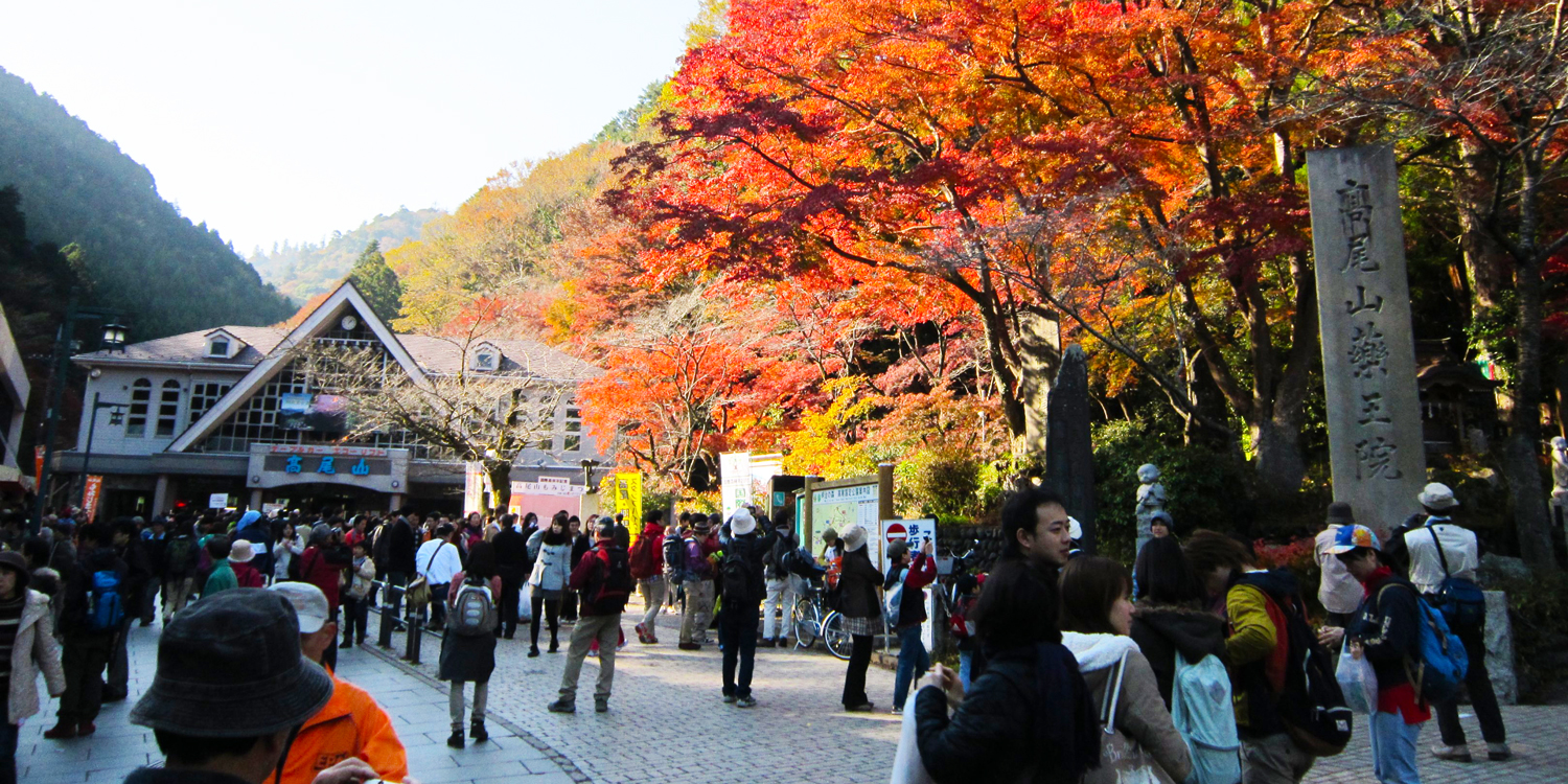 See Japan's countryside ablaze in autumn colours