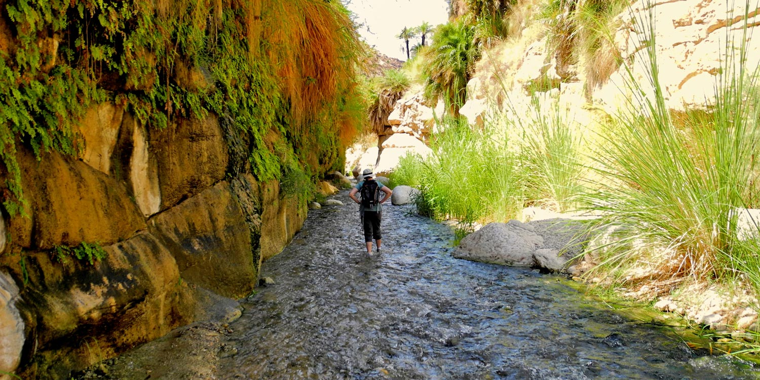 Trek through Wadi Bin Hammad