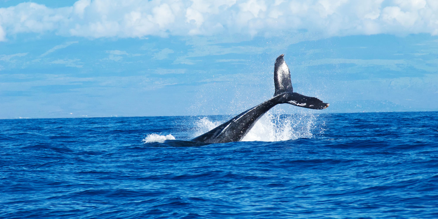 The World's Whale-Watching Capital